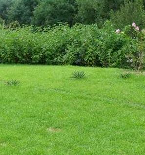 人造草坪厂家